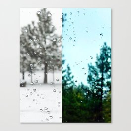 Rainy Trees Canvas Print