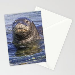Hawaiian Monk Seal Stationery Cards
