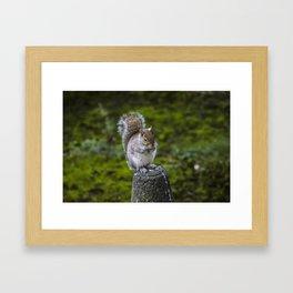 The Chubby Squirrel Framed Art Print