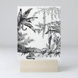 Ring-tailed lemurs of Madagascar .1 B/W Mini Art Print