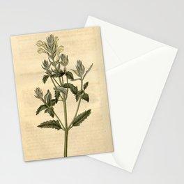 Flower 2120 scutellaria orientalis Yellow flowered Skull Cap10 Stationery Cards