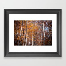 Golden brown leaves Framed Art Print