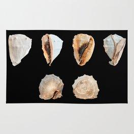 Mollusks Rug