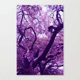 Georgia Tree Canvas Print