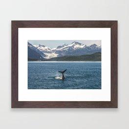 Baby Humpback Whale Framed Art Print
