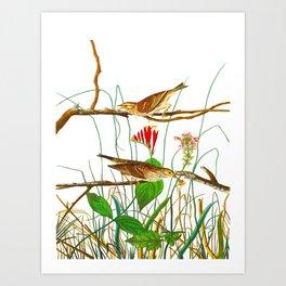 Savannah Finch Bird Art Print