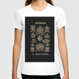 """""""Stephoidea"""" from """"Art Forms of Nature"""" by Ernst Haeckel T-shirt"""