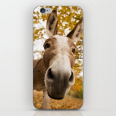 Curious Donkey iPhone & iPod Skin