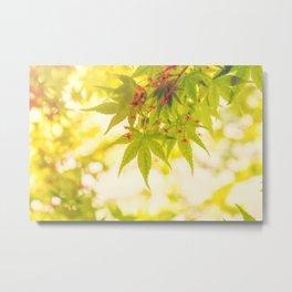 Green leaves of Japanese maple - vintage style Metal Print