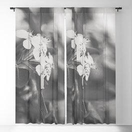 Yesterday in Spring Blackout Curtain