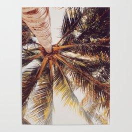 Yucatan Palmera Poster