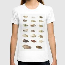 Twenty Tropical Shells by Johann Gustav Hoch (1716-1779) T-shirt