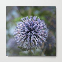 Abstract Allium Metal Print