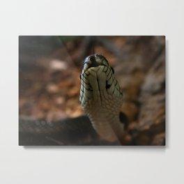 Snake Tongue Metal Print