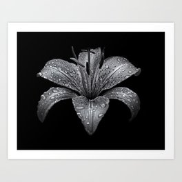 Backyard Flowers In Black And White 8 Art Print