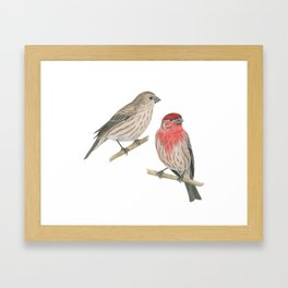House Finch Pair Framed Art Print