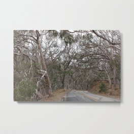 Dead trees covering the road Metal Print