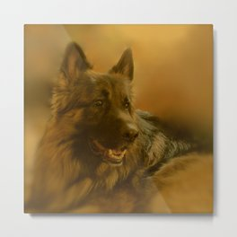 Golden King Shepherd Metal Print