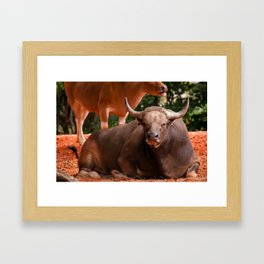 Gentle Giant - Two by Two Framed Art Print