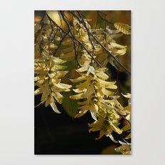 Lindenblüten Canvas Print