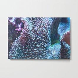 Haddon's Carpet Sea Anemone, Blue/Green Metal Print