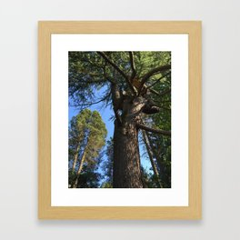 Tree at Kubota Garden in Seattle Framed Art Print