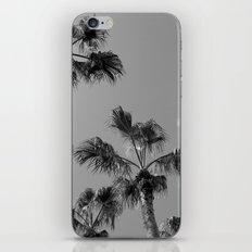 Palm Tress, Fuerteventura. iPhone & iPod Skin