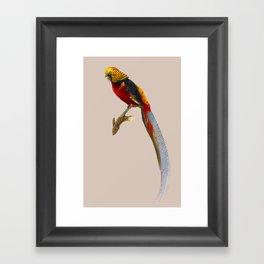 Pheasant Framed Art Print