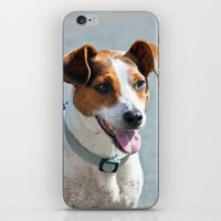 jack russell iPhone & iPod Skins featuring Jack Russell by Doug McRae