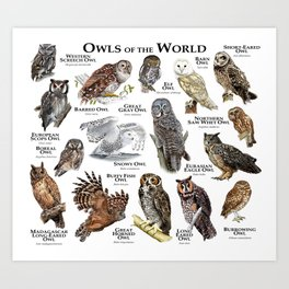 Owls of the World Art Print
