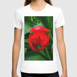 Tulip in Bloom T-shirt