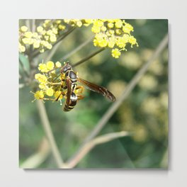 Fennel and Insect Metal Print