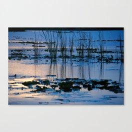 10001 Lily pond Canvas Print