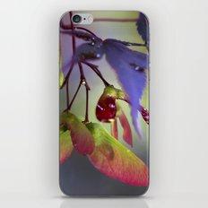 Japanese Maple Seeds iPhone & iPod Skin