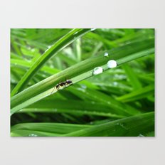 Ant with two drops of water Canvas Print