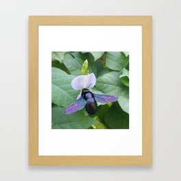 Between A Bee & A Flower Framed Art Print