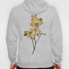 Yellow Phalaenopsis Orchid Traditional Artwork Hoody