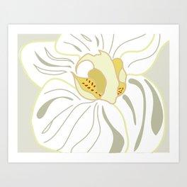 white orchid 1 Art Print