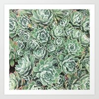 Succulent Bed Art Print