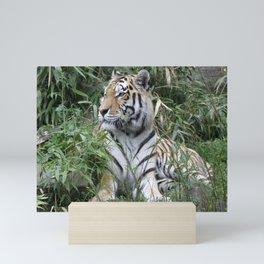 Tiger 619-1 Mini Art Print