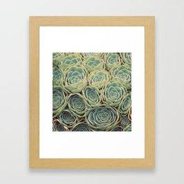 Sea of Succulents Framed Art Print