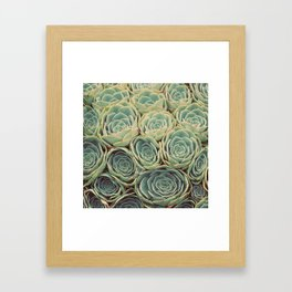 Sea of Succulents Framed Art Print