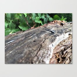 Co-Creating with Dragonfly Canvas Print