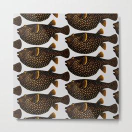 Brown spotty fish Metal Print