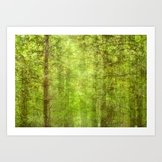 Pine forests Art Print