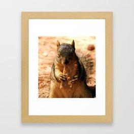 Contented Squirrel. © J. Montague. Framed Art Print
