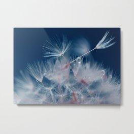 Snow Dandelion Metal Print