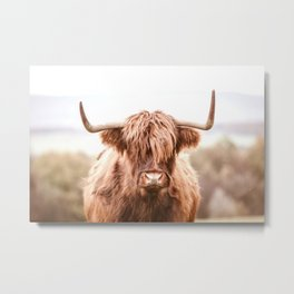 Highland Cow in a Field Southern Metal Print
