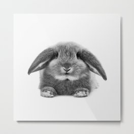 Bunny rabbit sitting Metal Print