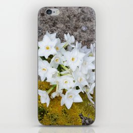 Bunch of narcissi iPhone Skin